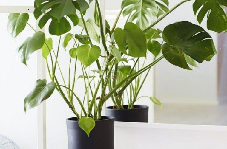 e09c820fe0b80b3a7a1dc1ac873150fd plants indoor house plants